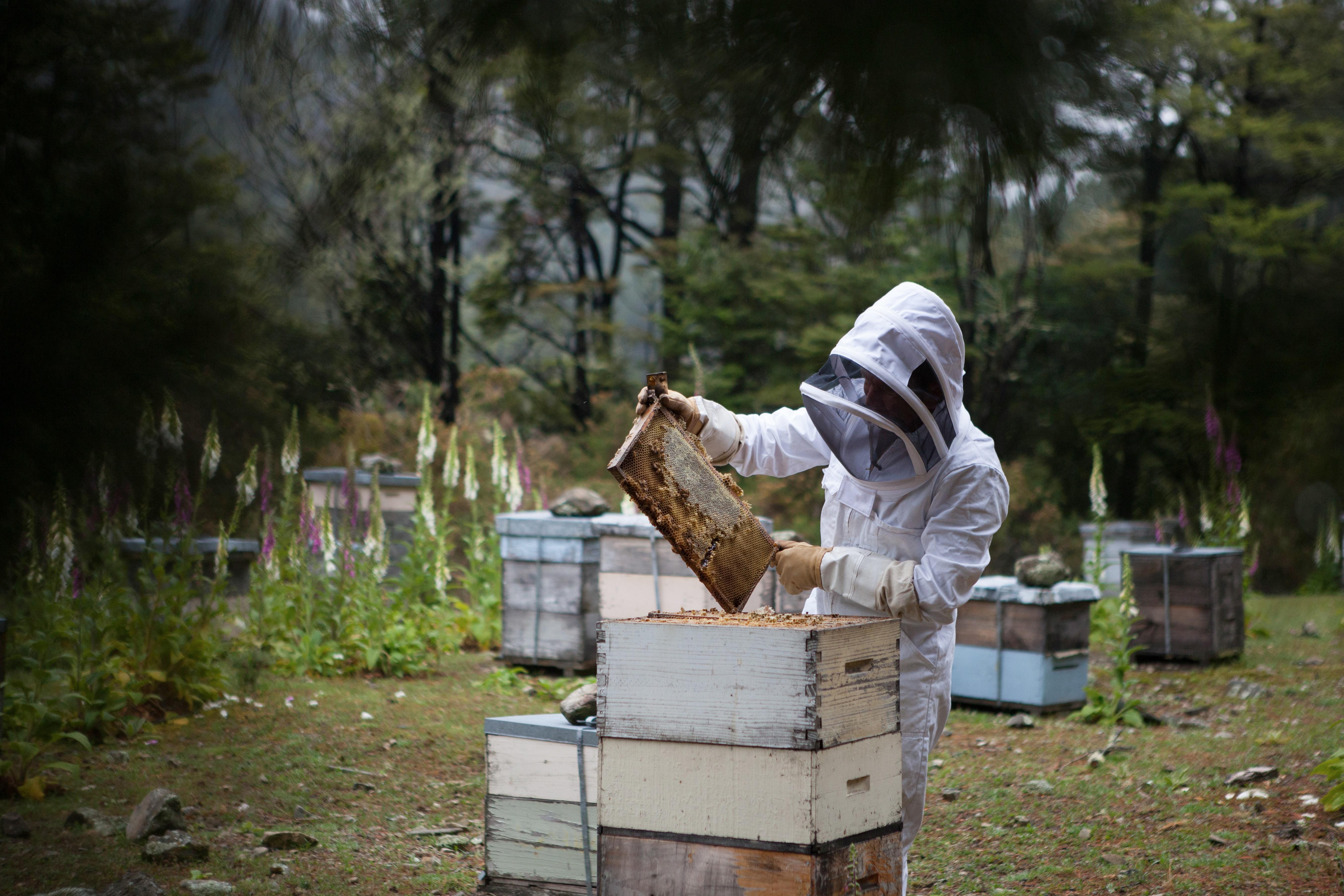 Chch bees
