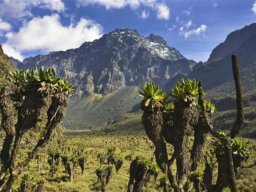 Om en tur i Rwenzori – Ugandas snekledte eventyrfjell.