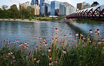 Calgary Bridge_cropped.jpg