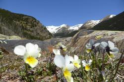 Rutes guiades Muntanya i Natura_ flors d