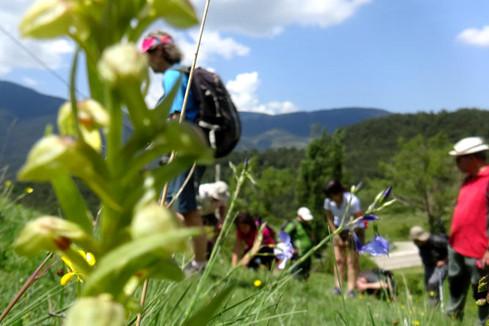 Grup de Recerca Botànica de Muntanya i Natura