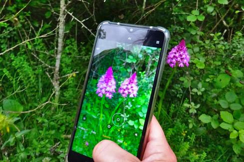 Monogràfic d'orquídies del Grup de Recerca Botànica de Muntanya i Natura