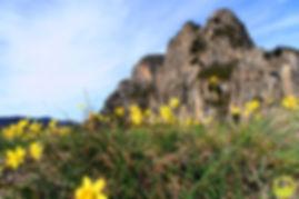 Excursió al cim del Puigsacalm