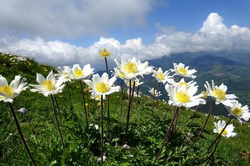 Sortida de plantes de muntanya del Grup de Recerca Botànica de Muntanya i Natura