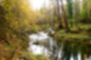Passejada pel bosc de Pedra Tosca