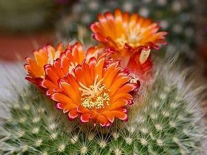dont touch flower.jpg