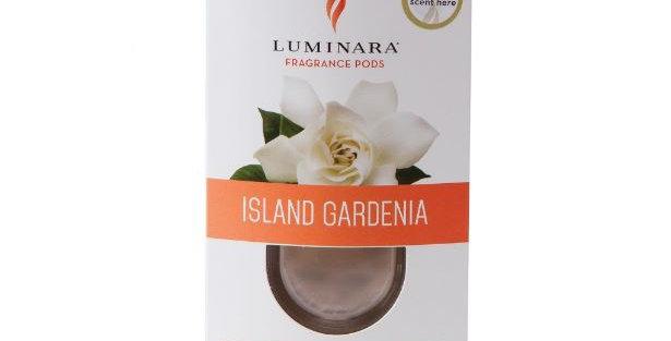 Island Gardenia