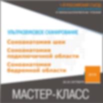Соноанатомия Быков.png
