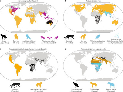 Friend, not foe: Review highlights benefits of predators and scavengers