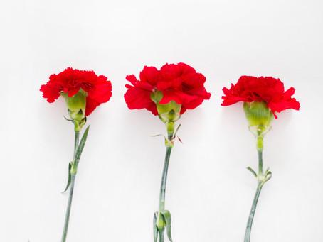 Flor de Temporada: Clavel