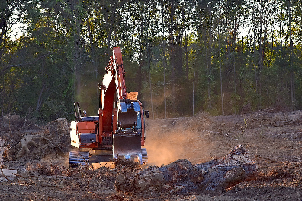 Large Scale Deforestation