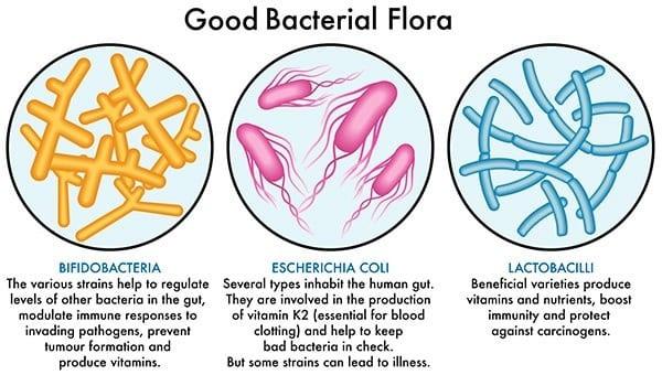 Good Bacteria Flora