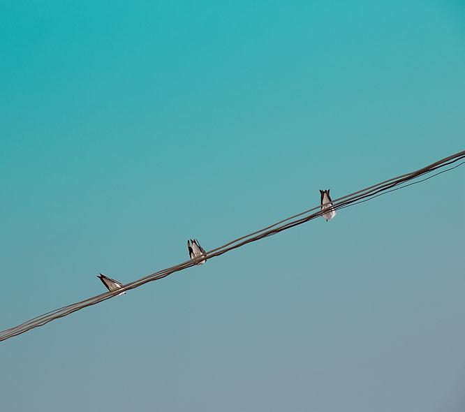Golondrinas - Bird Series