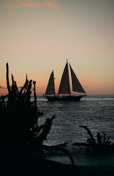 Sail & Roots