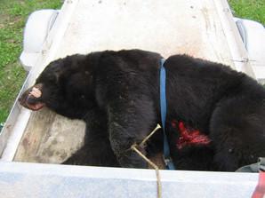 bearhunt09008.jpg