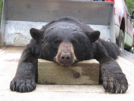 bearhunt09014.jpg