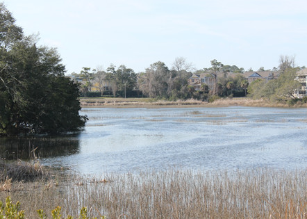 Dine and enjoy the waterview and all the great South Carolina Wildlife that provide us entertainment!