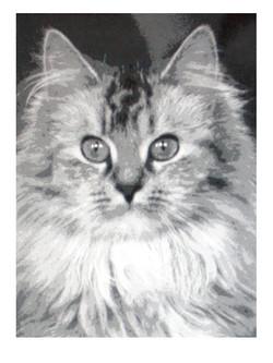 Kissa 2