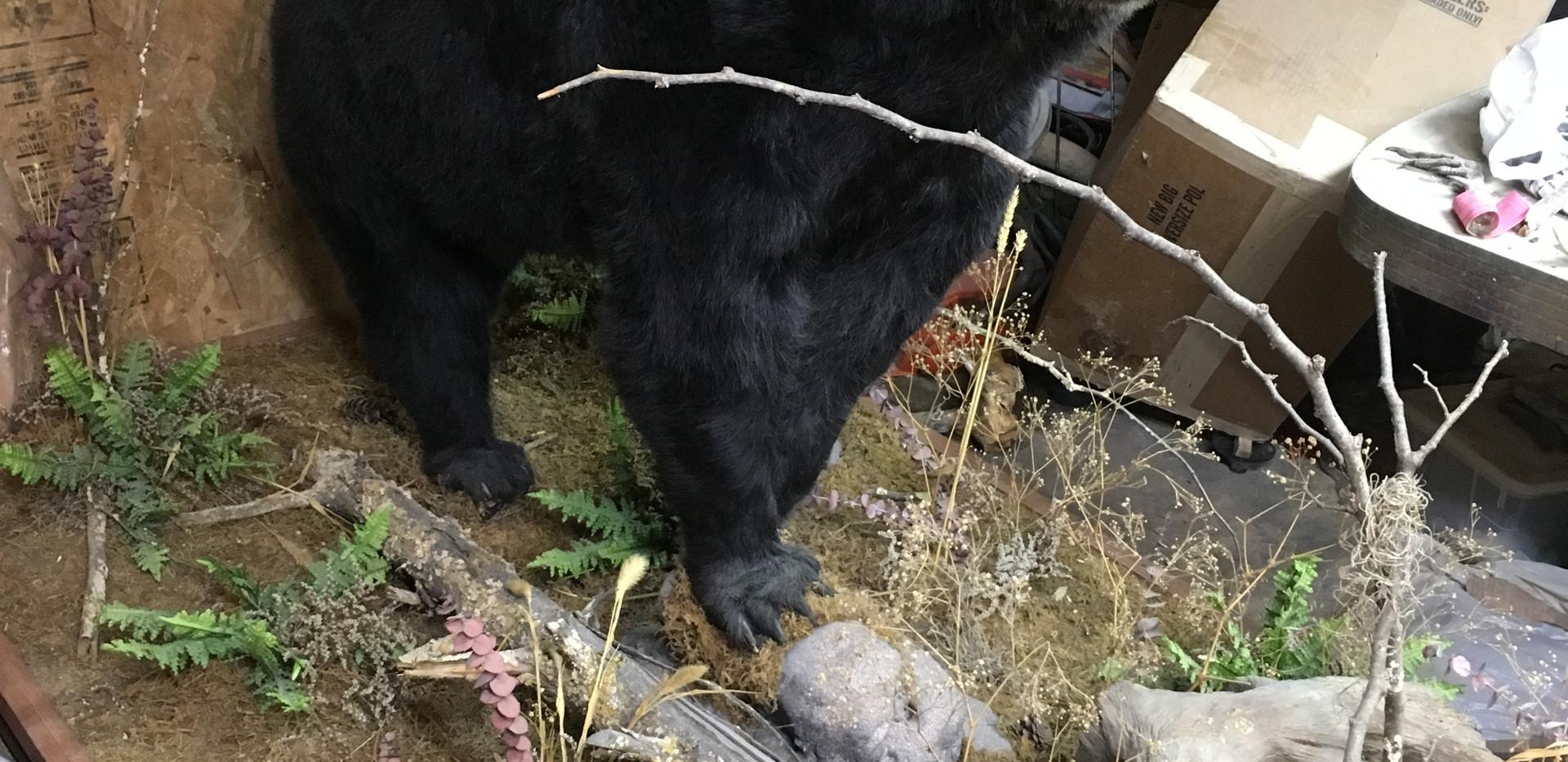 Bear Mount For Sale