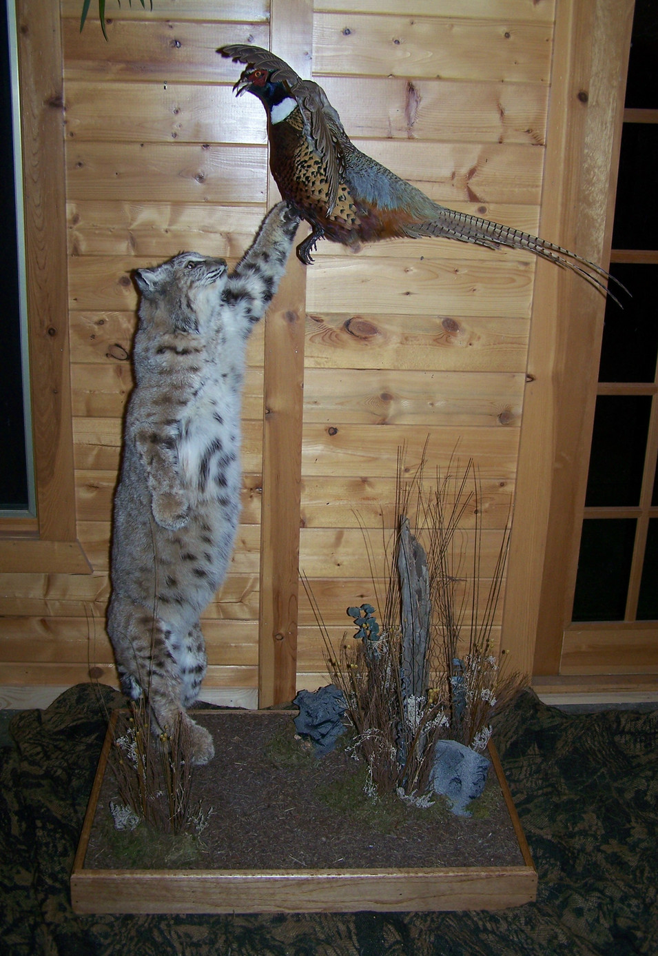 Bobcat w/ Pheasant
