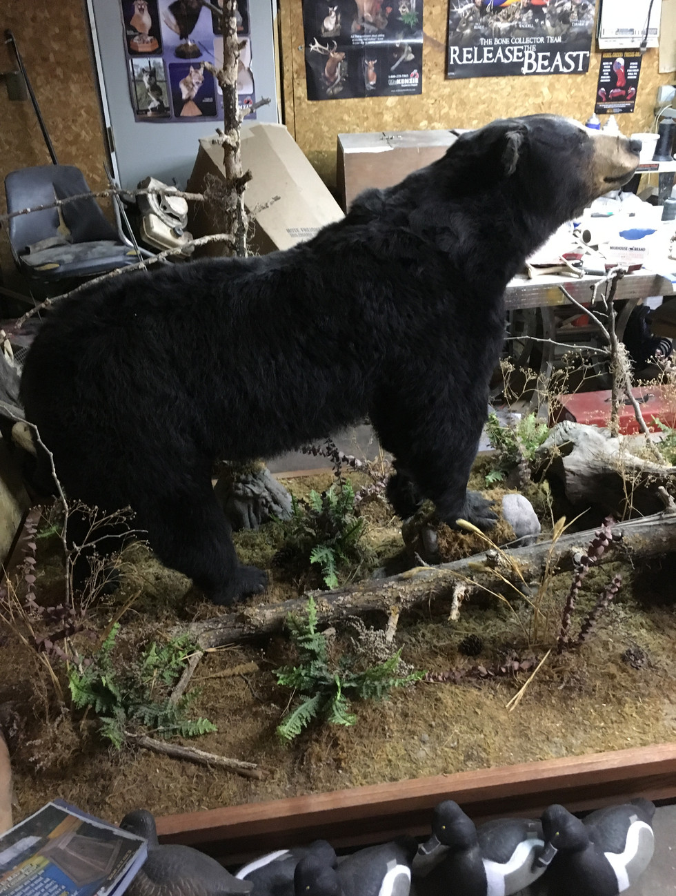 Bear Mount For Sale