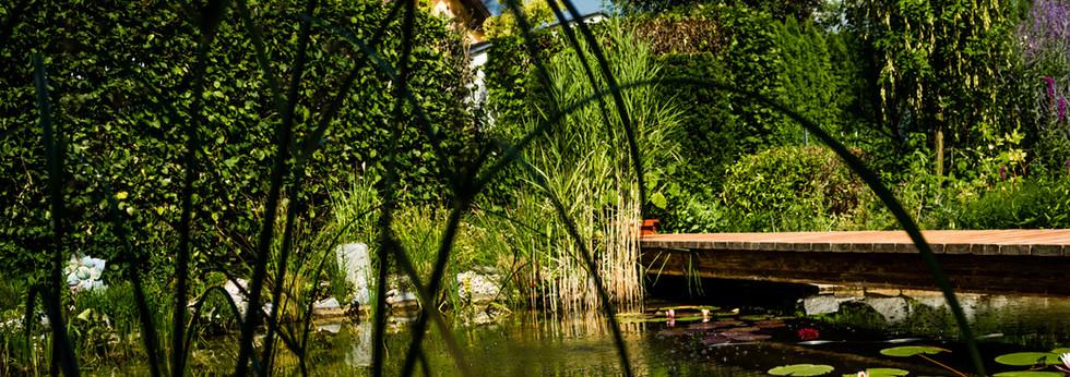 Teich mit Wsserlilien