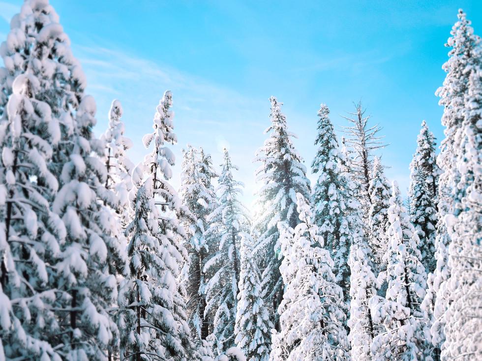 Winterlandschaft (c) stanley-dai