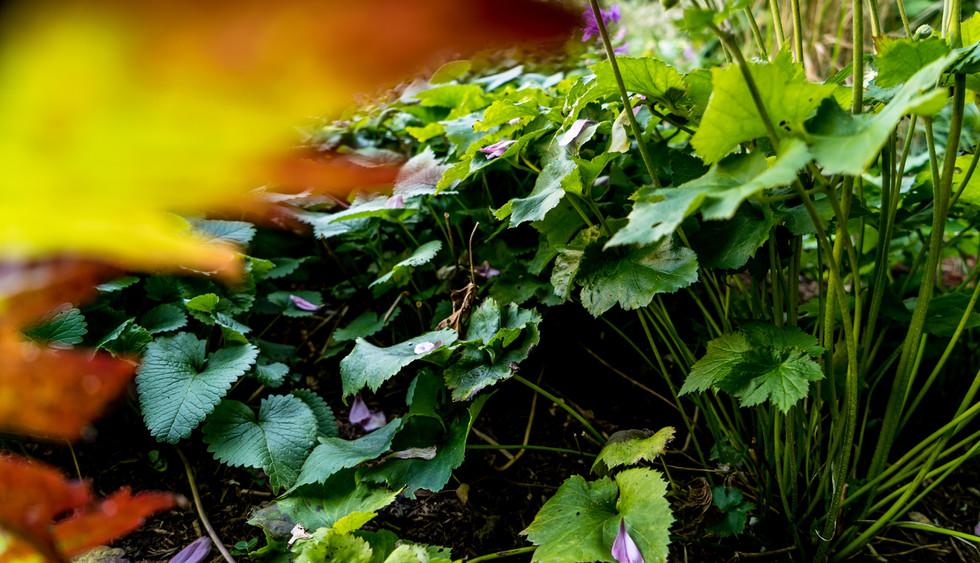AbsolutGruen_Gartenfotografie_Copyright_