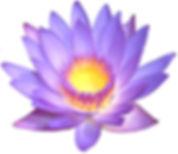 lotus-flower-3.jpg