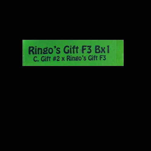 Ringo's Gift F3 Bx1