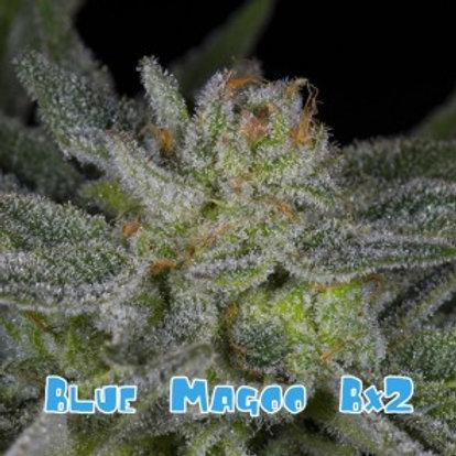 Blue Magoo BX2