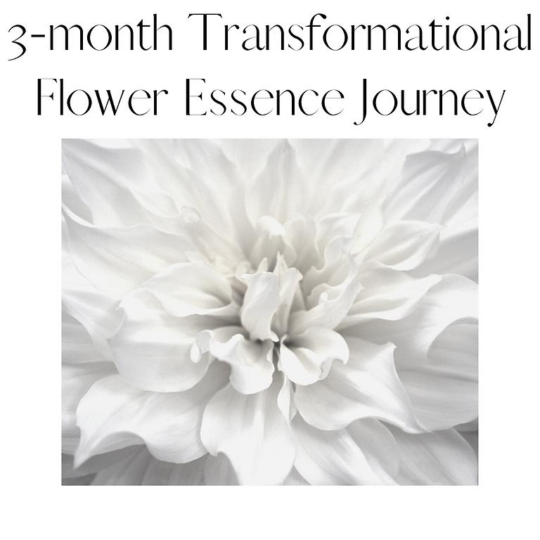 3-month Transformational Flower Essence Journey