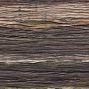 Wand Baumrindenoptik Amazon GFK Wandpaneele