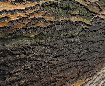 Amazon Rindenpaneele