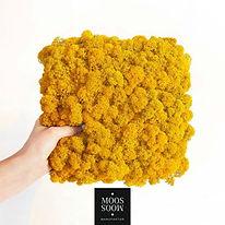 Islandmoos gelb gefärbt mit lichtechter Farbe