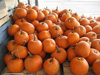 Fresh pumpkins for roasting