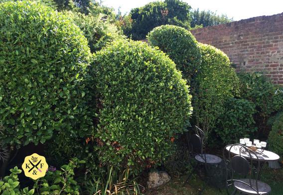 Ornamental shrubs.jpeg