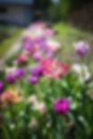 pexels-photo-59659.jpeg