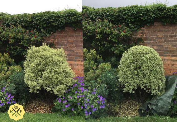 Topiary1.png