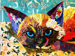 Cat no judgement  SOLD