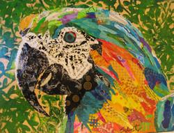 Macaw  $125
