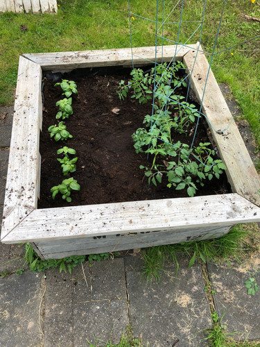 10. Plant seeds, grow food.