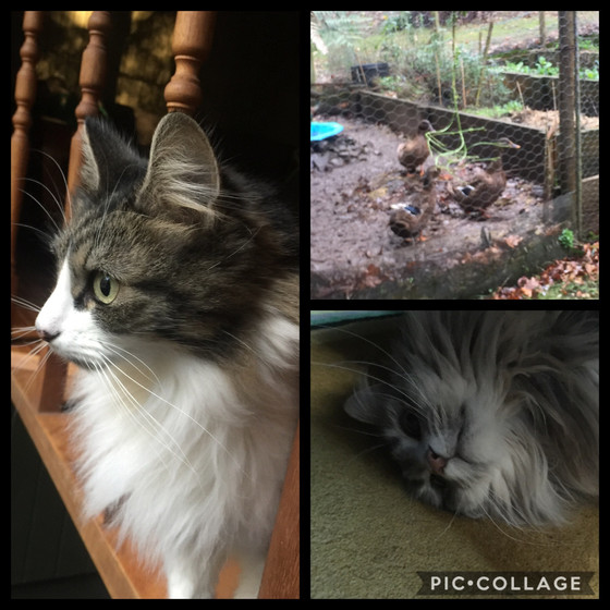 Willow, Maggie and the Puddle Ducks -Providing tailored options other than cat boarding &catter