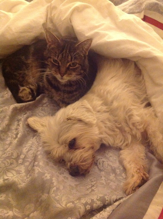 Visiting Monty-Providing tailored options other than cat boarding, catteries, home visits, for cats