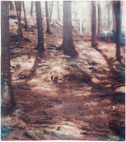 Tripping Through The Forest - 2007