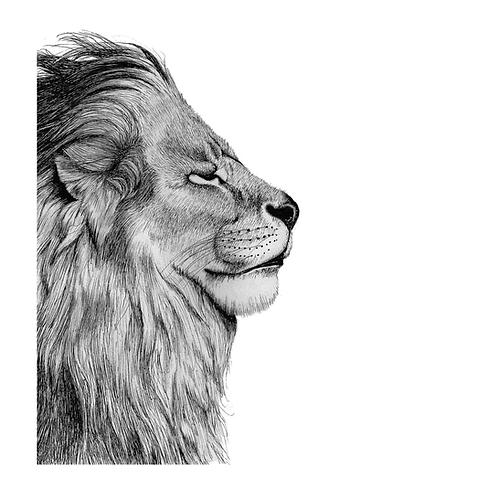 Lion Print - Signed