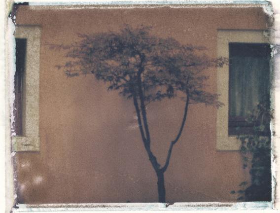 Arbusto 2006