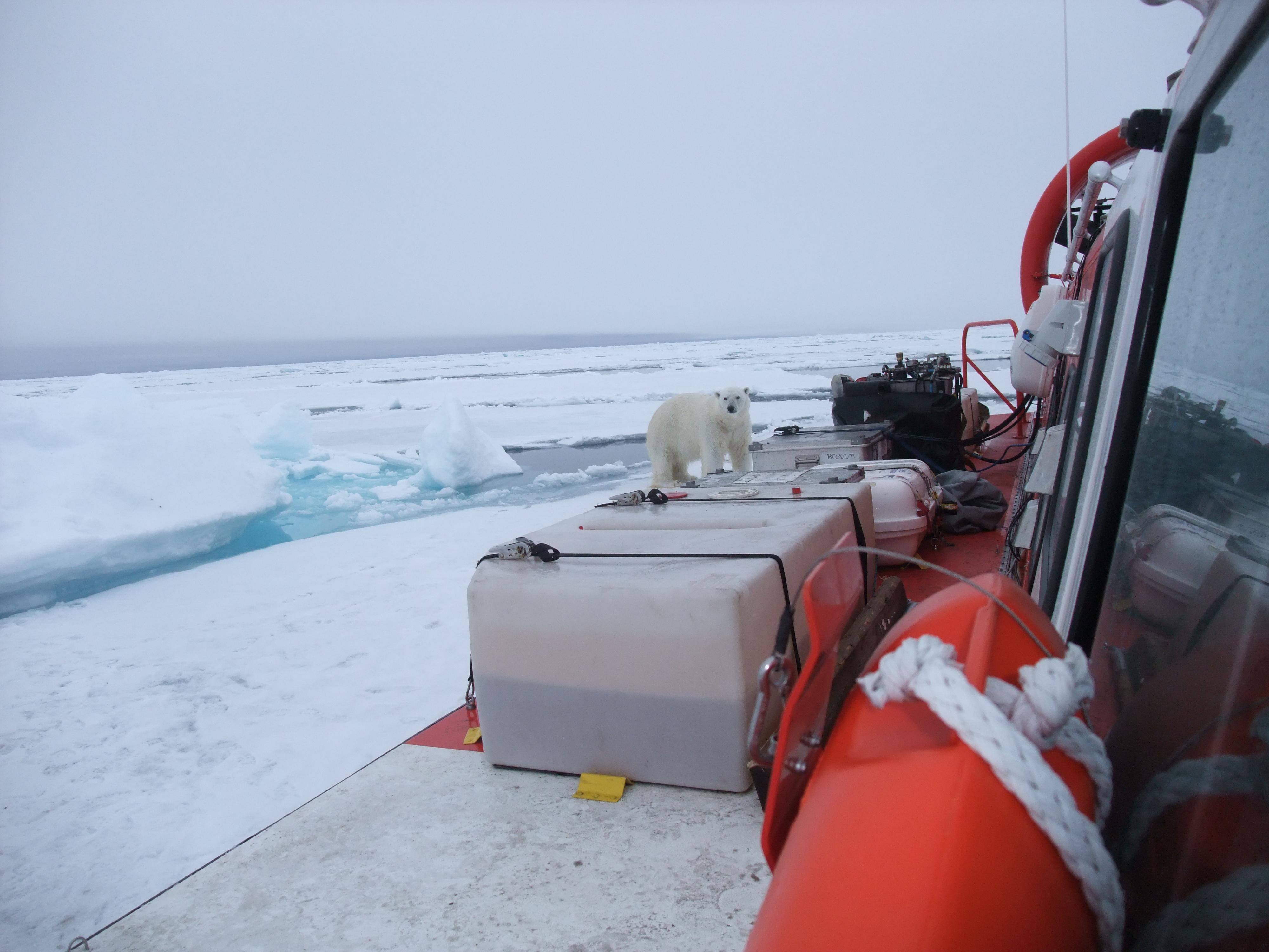 Polarbear Hovercraft Travel