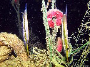 PADI-Night-Diver-Specialty-Course-Miami.