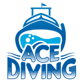 ace diving miami scuba diving padi near